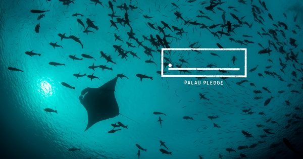 How a Surge of Tourists and Ecological Threats Led to Palau Pledge, Cannes' Top Campaign