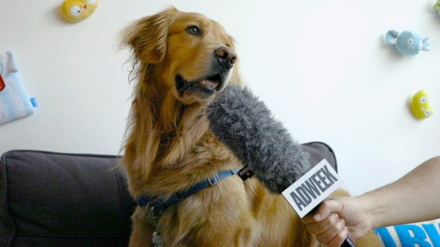 Dog speaking into an Adweek microphone