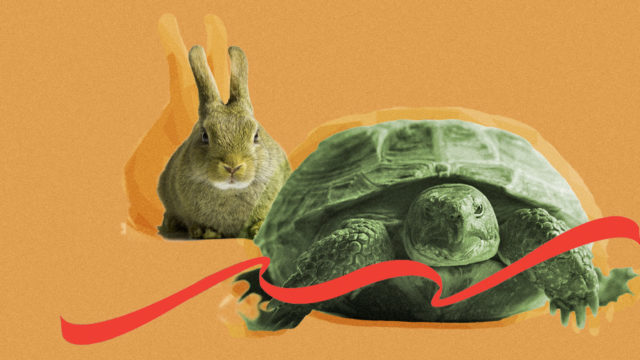 turtle and rabbit racing