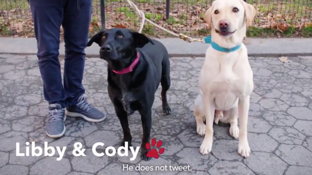 Mike Bloomberg Promises He Knows How to Interact with Dogs in New Ad