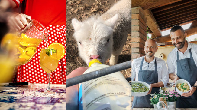 three panels: left is someone making a cocktail, middle is a baby goat being fed, right is two men cooking