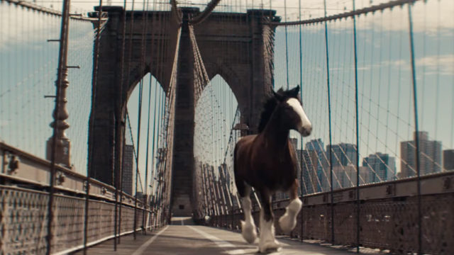 a clydesdale on the brooklyn bridge