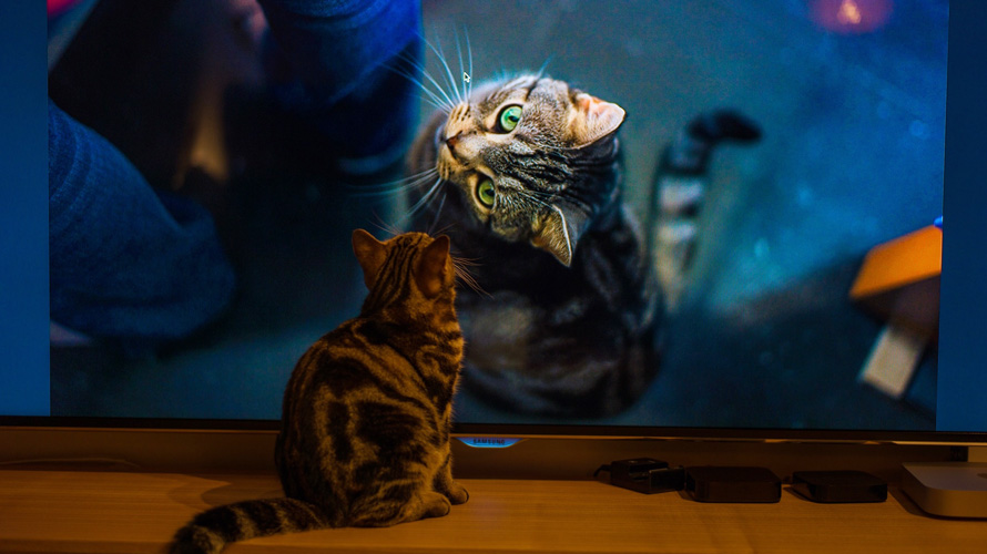 a cat turning its head and looking at a smaller orange cat