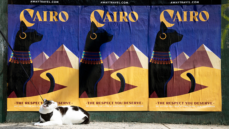 Three posters of black cats wearing Egyptian jewelry that say Cairo on top and The respect your deserve on the bottom with a white and black cat sitting on the ground in front of them looking up at them.