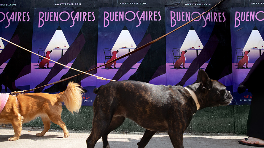 Two dogs walking past posters that says Buenos Aires showing a dog in a kitchen looking up at a steak on a table