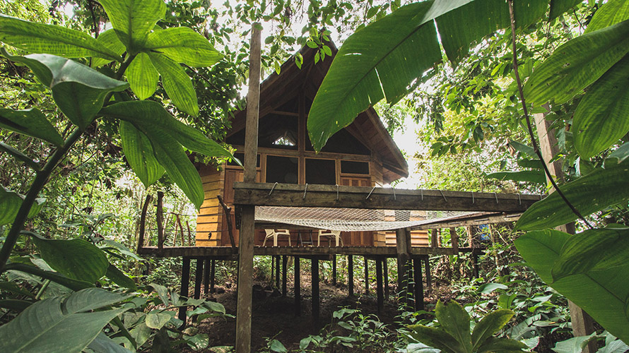 an outdoor treehouse in a rainforest