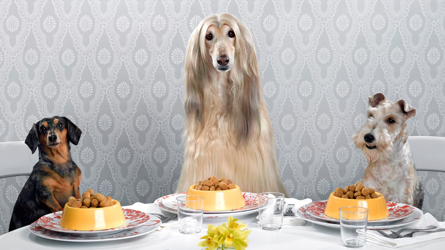 three dogs sitting at a table with meals