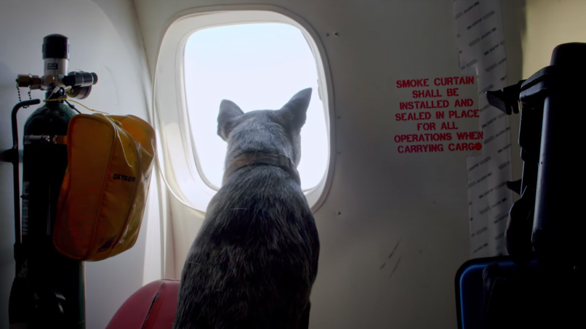 Still of a dog looking out an airplane window