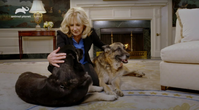 Jill Biden with dogs Champ and Major