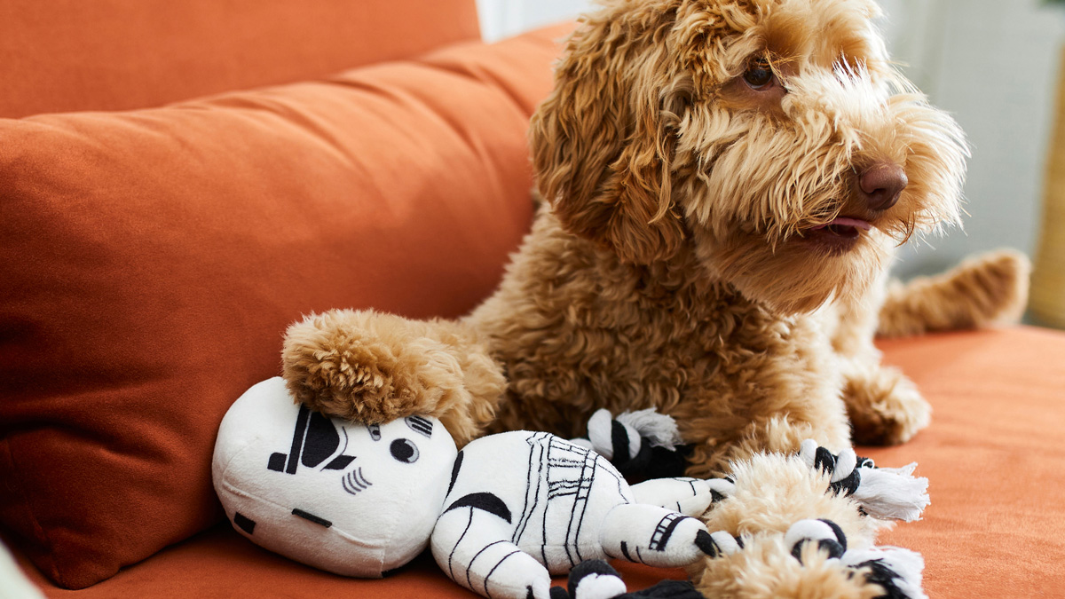a dog sitting with a storm trooper dog toy