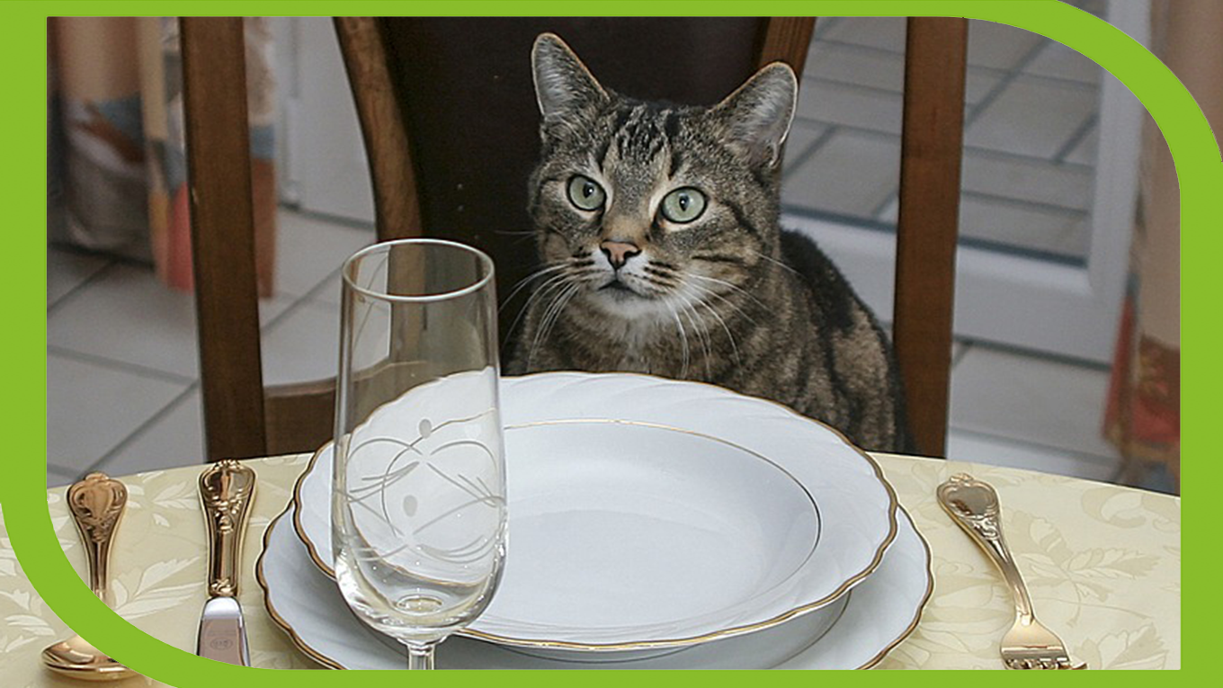 "The cookbook ""allows cat owners to take part in the dining experience with their cats."""