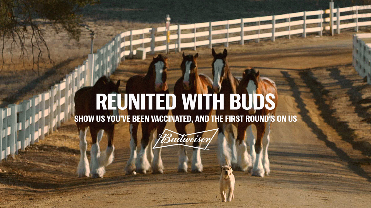 Four horses and a puppy with the text, 'Reunited with buds' and 'Show us you've been vaccinated, and the first round's on us'