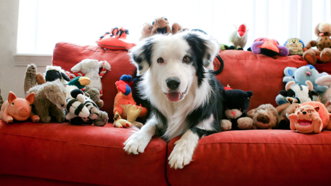 a dog on a red couch surrounded by stuffed animals
