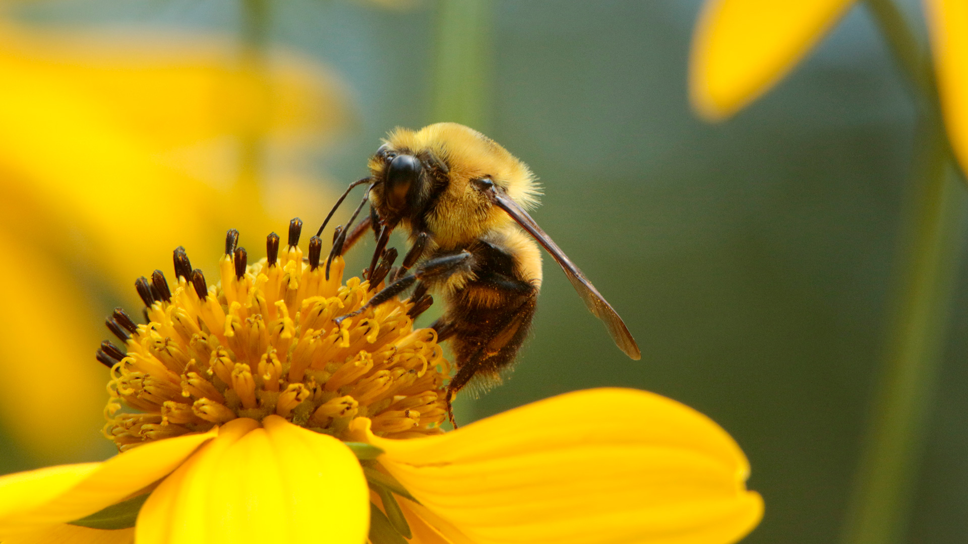Pollinating animals like bees help 75% of the world's crops grow.