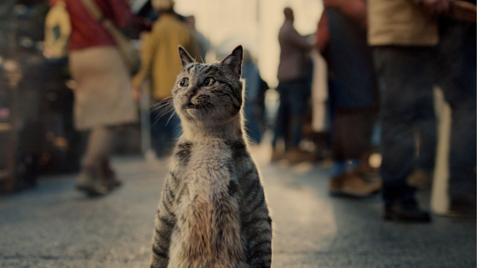 Cat walks on hind legs with confidence through market