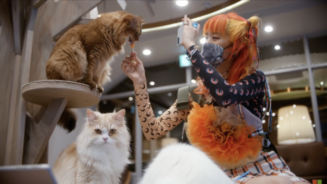 A woman in a cat cafe