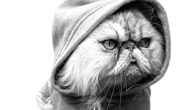A cat wearing a hoodie stares into the distance in an artistic black and white portrait photo