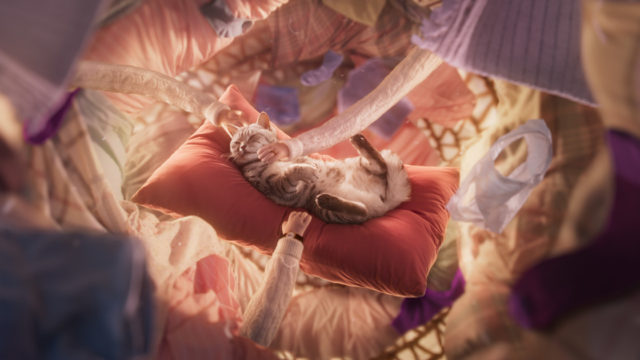 Whiskas Drops an Album of Music That De-Stresses Cats, So Their Owners Can Relax Too