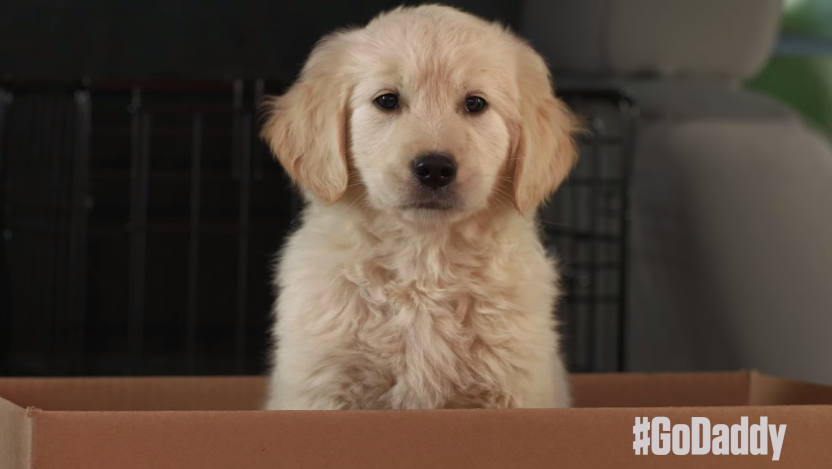 GoDaddy Pulls Super Bowl Ad After Complaints About 'Puppy
